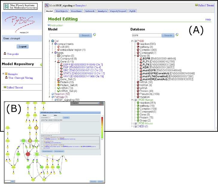 <p>(A) The PyBioS software (http:// pybios.molgen.mpg.de) acts as a repository for mathematical models of biological systems. Different tabs of the web interface provide functions for model design, simulation, analy- sis, and visualization (B).</p>